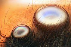 Dos ojos de una araña saltadora