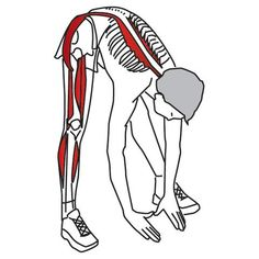 Hip Adductors Hip Abductors Hamstring Muscles Most therapists agree that stretching is a key component of their trigger point treatment protoc Hip Stretching Exercises, Hip Flexor Exercises, Hamstring Muscles, Sciatica Exercises, Body Stretches, Hip Muscles, Back Exercises, Stretching Program, Shoulder Stretches