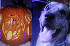 Carved pumpkin - Harry.