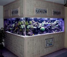 In-wall reef tank