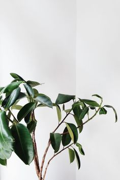 Soft foliage