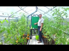 Just How Does Greenhouse Humidification Work?