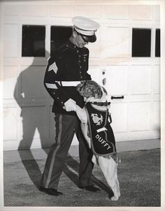 """Duffy, ca. 1941-1945 by Marine Corps Archives & Special Collections. """"Duffy, white and brindle bulldog, will soon arrive at San Diego, California, where he will be the mascot of the U.S. Marines at the West Coast base. He is shown bidding farewell to Sergeant Earl V. Swift on the eve of his departure from Philadelphia. Duffy is a half-brother of Jiggs IV, official mascot of the Marine Corps, stationed at Quantico, VA. The dog is a gift from Dr. and Mrs. Frederic James, of Quaker City."""""""