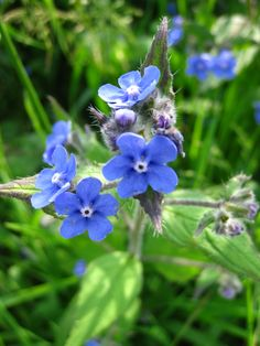Wildflowers and meadows on Pinterest | Wild Flowers, Meadow Flowers and Fields