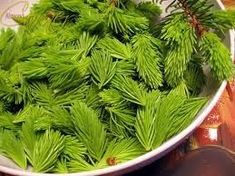 """It was an experiement and it turned out great! I love the taste of the """"green fir honey"""" it is only a bit resinous and has a nice aroma. Almond, Herbs, Canning, Green, Corner, Food, Diy, Honey, Rezepte"""