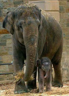 Gorgeous mother and baby  💖