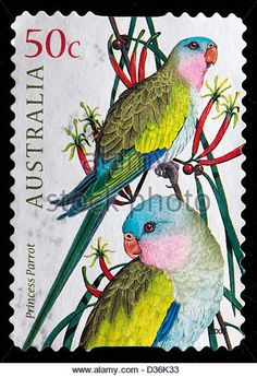 Princess parrot postage stamp from Australia Zoo 2, Postage Stamp Design, Art Postal, Poster Art, Love Stamps, Vintage Stamps, Stamp Collecting, Mail Art, My Stamp