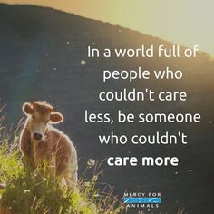 Care, live with compassion. Go vegan and live a cruelty free life.