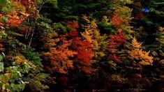 ♡ Autumn Melancholy ( Stamatis Spanoudakis music)