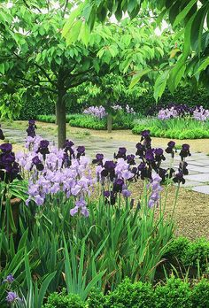 Purple Iris Beds.  If you like this garden, read our article on getting more iris blooms in your own garden at http://gardendesignforliving.com/?p=1150