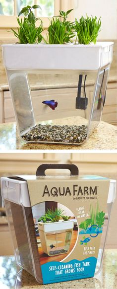 Aqua Farm Self Cleaning Fish Tank That Grows Food! #brilliant
