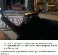 Hahaha!  Love the look on the cats face!