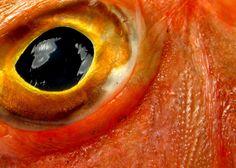 Gurnard fish eye view
