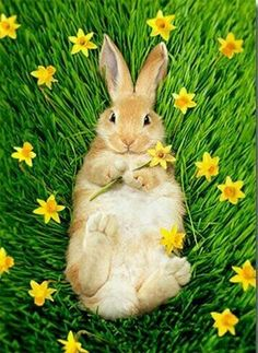 Bunny belly! By Avanti Greeting Cards