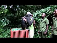 chimpanzee hugs after being released from years of torture. if tears don't cross down your face- i pity you