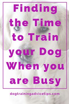 Our day to day lives are already filled with many things, so finding the time to train your dog is challenging. Find out how to free up your busy schedule! Training Your Puppy, Dog Training Tips, Raising Kittens, Dog Minding, Dog Training Courses, Stop Dog Barking, Easiest Dogs To Train, Dog Training Techniques, Dogs And Puppies