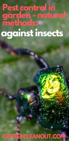 Pest control in garden - natural methods: against insects - Critter clean out Tips And Tricks, Garden Insects, Garden Pests, Garden Types, Planting Spinach, Short Plants, Sun Loving Plants, Soil Layers, Insect Pest