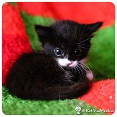 Aww so tiny