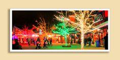 Zoo Lights at Hogle Zoo Zoo Lights, Utah Adventures, Holiday Traditions, Christmas Countdown, Salt Lake City, Outdoor Fun, Yule, Beautiful World, Fun Things