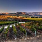 Napa California Wine