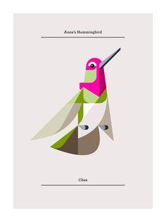 Anna's Hummingbird | Josh Brill