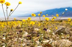 Photo Diary: The Super Bloom in Death Valley – Free People Blog | Free People Blog #freepeople