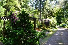 "From the NPA Open Garden book, "" A Northwest pleasure garden tucked in a Federal Way neighborhood, the three acres of Powelswood are nestled. Federal Way, Clematis, Acre, The Neighbourhood, Sidewalk, Letters, Garden, Garden Paths, Gardens"