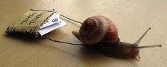 snail mail, is denk ik wel leuk om er een visueel beeld aan te koppelen wat herkenbaar is zoals een langzame slak om het langzame proces van een brief te vergelijken