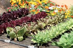 vegetable garden irrigation ideas home garden design plans Starting A Vegetable Garden, Backyard Vegetable Gardens, Vegetable Garden Design, Garden Plants, Outdoor Gardens, May Garden, Love Garden, Garden Ideas, Garden Design Plans