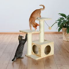 Trixie Pet Products Valencia scratching post, 71 cm, beige - 43771 Cat Tree NEW Cat Towers, Cleaning Toys, Cat Pose, Cat Scratching Post, Cat Scratcher, Cat Condo, Cat Supplies, Cat Furniture, Diy Stuffed Animals