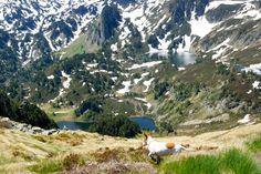 #Ascou #Ariège #3Lacs #Lake #Lac #PicdeTarbescou #Occitanie #TourismeOccitanie #Pyrénées #Mountain #Bergen #Montagne #Dog #Hund #chien