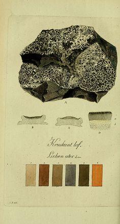 Lichen  n303_w1150 by BioDivLibrary, via Flickr