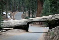 The narrow Crescent Meadow Road, located in Sequoia National Park (USA) leaves the Generals Highway at Giant Forest Village.