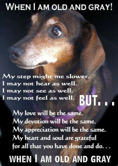 Senior pets need love too. If you live in Ontario, Canada you can request an application to adopt a senior dachshund through Canadian Dachshund Rescue (Ontario). Please email us at adopt@wienerdogrescue.com