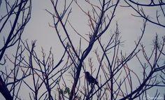 Blackbird, fly.