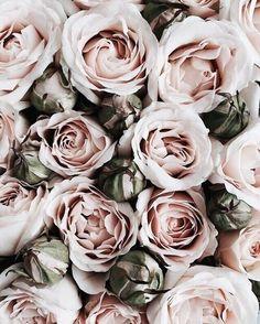 40 Ideas Flowers Wallpaper Vintage Romances For 2019