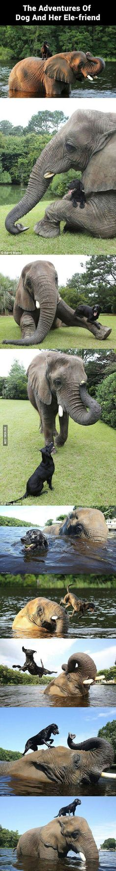 The cutest and most unlikely animal friendship you'll see - Adventure of Dog and her Ele-friend. #dog #elephant #animals