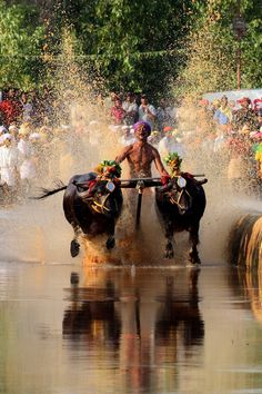Kambala is an annual Buffalo Race held traditionally under the auspices of aristocratic Bunt Households in coastal Karnataka,India. Goa India, India And Pakistan, Robert Doisneau, Sri Lanka, Indiana, Street Photography, Travel Photography, Landscape Photography, Cultura General