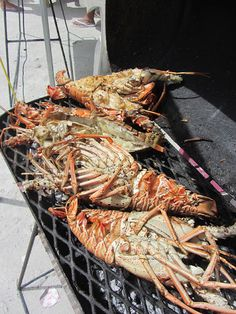 Our little sister island of Caye Caulker hosts the original Lobsterfest in Belize. Rather than spreading countless events over a full week and a big Belize Vacations, Belize Resorts, Belize Travel, Caye Caulker Belize, Ambergris Caye, San Pedro Belize, Weather In Belize, Ocean Food, Mother Recipe