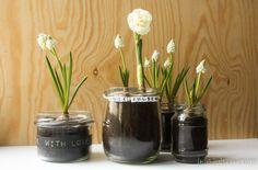 beautiful white spring flowers  in glas jars