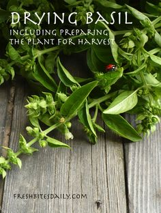 Drying basil leaves with tips on managing your basil harvest | Fresh Bites Daily