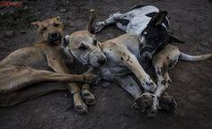 Fotos revelam o horror da indústria da carne de cachorro na Indonésia