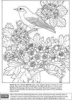 State Birds And Flowers