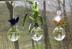 Bud vases on a budget;  Clear light bulbs w/ the guts removed (I used a drill & needle-nose pliers)   I hung mine with ribbon (after trying colored craft wire) on window suction cups,..