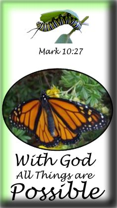 Believe it!  * * * * * * * * * * * * * * * * * * * * * * * * * *  * * * * * * * * * * * * * Original photographs of a Monarch butterfly and caterpillar illustrate a beautiful Bible principle. #monarch #christian