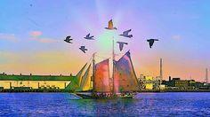 Sailing with a bird + sun escort
