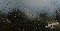 Rain © Photo by Sasha James Dion  #Rain