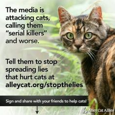 Feral Cats are not Killers; They are Deserving of Compassion & Have a Right to Live Out Their Lives. TNR WORKS