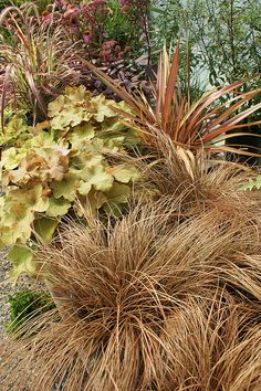 Carex 'Cappucino', Heuchera 'Caramel', Phormium 'Terracotta' by KarlGercens.com, via Flickr