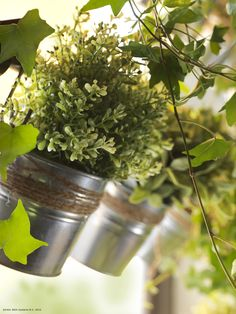 Geamul tău din bucătărie se poate transforma într-un suport pentru flori.